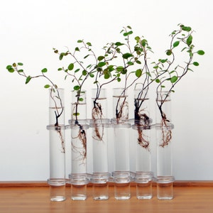 Lovely 6 Pcs Tube Shaped Glass Vases Design Ideas