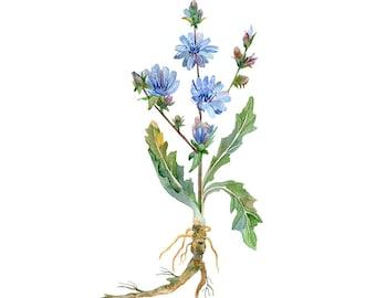 Chicory Flower Original Watercolour Painting 91