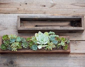 """Boîte de 4 """"x 18» planteur Succulent"""