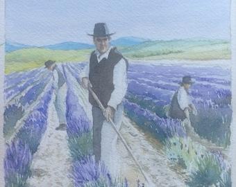 Lavender harvest original watercolor painting watercolor Lavender harvest original aquarel acuarela wasserfarbe Provence