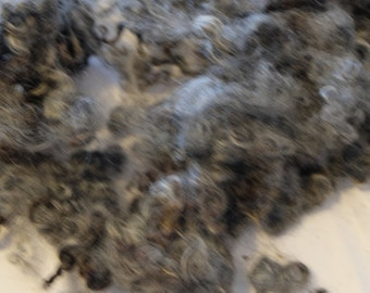 Wool from the Gotland Pelzschaf lamb, washed
