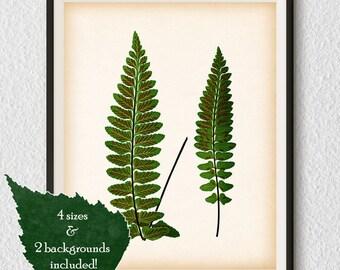 Fern print, Vintage fern illustration, Fern art, Antique botanical print, Wall art printable, Download print, 8x10, 11x14, A3, A4 art, #78