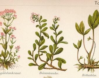 Wonderful antique print of medical plants - old wonderful print of various medicinal plants