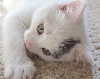 kitten Photography White Cat Photo Signed Print Nursery Photo White Photo