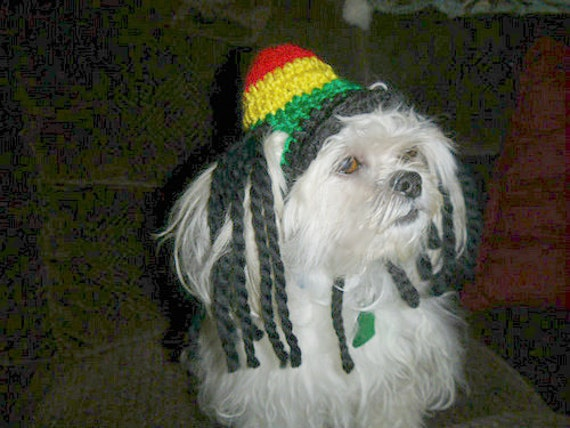 Animals With Dreads