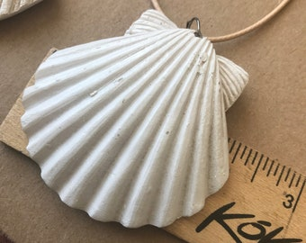 Shell 2 1/4 inch. Tide Collection