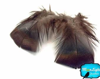 Wild Feathers, 1/4 Lb - Black Bronze Wild Turkey T-Base Plumage Wholesale Feathers (Bulk) : 4242