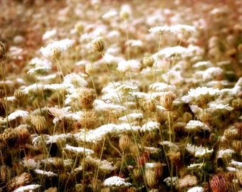 Queen Anne's Lace Flower, Field of Flowers, Large Wall Art, Home Decor, Fine Art Photography, Country Living, Nature