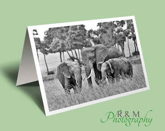 elephant greeting card - elephant photo blank greeting card - personalised card - personalized card - elephants - any occasion card