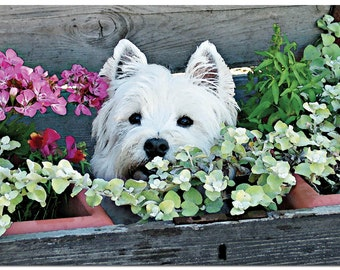 """G021- This beautiful 5"""" x 7"""" Westie Birthday card comes with a white envelope and is individually cellophane wrapped."""