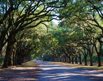 Nature Photography - Savannah's Wormsloe Plantation -Southern, Travel, Georgia, Trees, Pathways, Landscape, Green, Art, Fine Art Photography