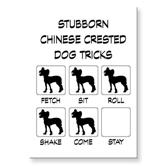 Chinese Crested Stubborn Tricks Funny Fridge Magnet