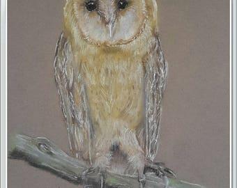 Owl, origional pastel picture.