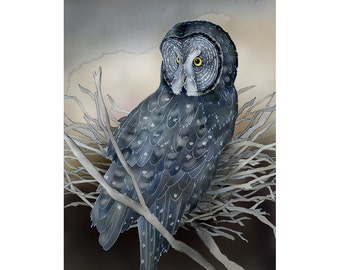 Great Gray Owl 2 - 9x12 signed fine art print; great grey owl; owls; owl print; bird lover