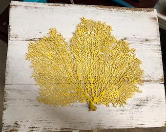 Coral Sea Fan on Reclaimed Wood