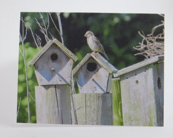 Bird Notecard, Birdhouse Notecards, Blank Note Card, Greeting Cards, All Occasion Cards, Single Note Card, Paper Goods