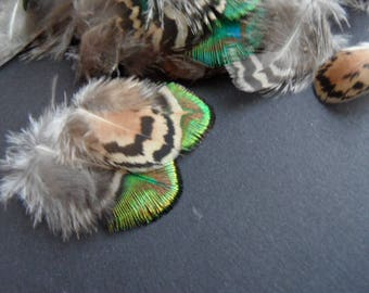 rare feathers of Peacock, 3 back =
