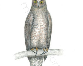 Powerful Owl Illustration Print