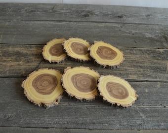 6 Stunning Elm Tree Slices ~  tree cookies, wood slices, wood discs, craft supplies, tree slices, tree slabs WS7011