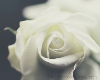 Rose photography white flower photo dreamy white rose print nature photography cream fine art print large wall art bedroom decor home decor