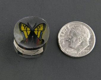 Swallowtail Boro Cane 7 grams - 117 D