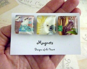 Square Glass Magnet set - Australian Stamp Collection - Australian Birds