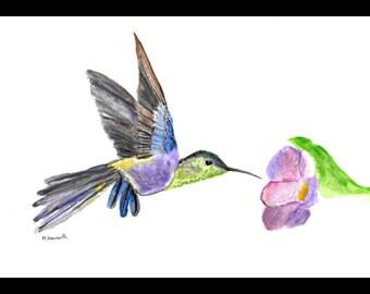 Hummingbird painting Beautiful bird art Hummingbird illustration Birds decor Bird original art 10 x 7 inches