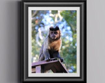 Capuchin Monkey Photograph, Wildlife Photography, Animal Picture, African Safari, Animal Close Up, Animal Lovers, Original Photos