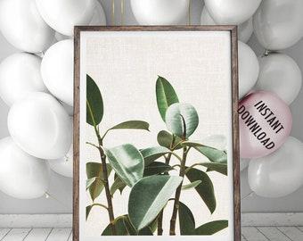 Ficus Large Print, Rubber Plant Wall Art, Botanical Poster, Large Green Leaves Print, Printable Decor, Ficus Wallpaper