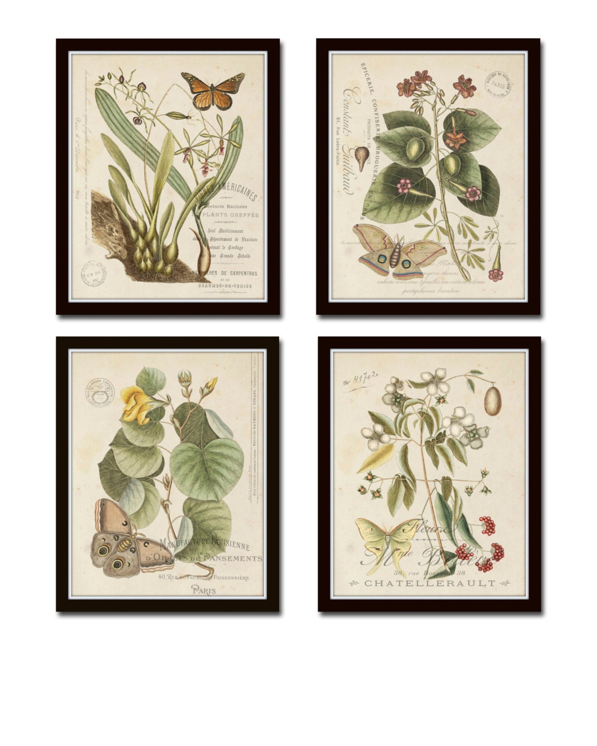 Vintage Butterfly and Botanical Print Set No.1 Giclee Art