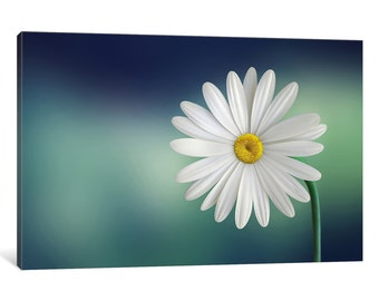 iCanvas Flower Gallery Wrapped Canvas Art Print by Bess Hamiti