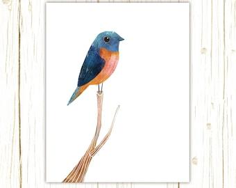 Blue-Fronted Redstart Print -- bird art -- colorful bird art by stephanie fizer coleman illustration