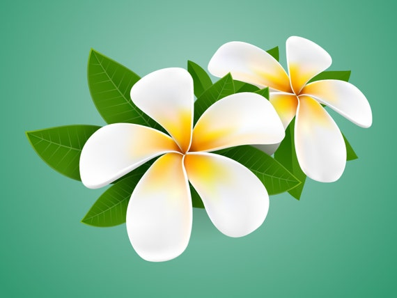Plumeria sticker decal personalize and stylize your