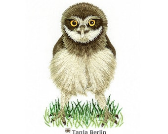 Hand Embroidery Kit - Baby Burrowing Owl Needle Painting Embroidery Kit