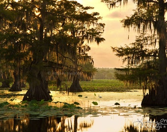 "Bayou Photo Print | ""Caddo Lake Morning"" 