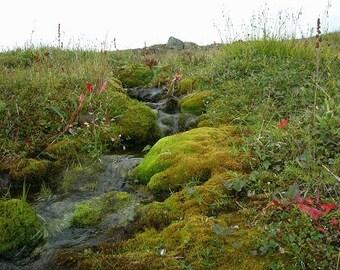 Alaskan Creek