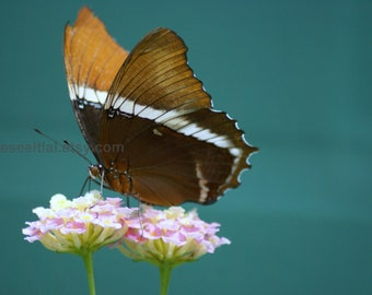 Brown Tip Page Butterfly photo greeting card