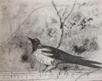 original pencil drawing of Pompeii bird (3)