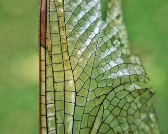 Insect Wing Fine Art Photograph/Macro Photography/Nature