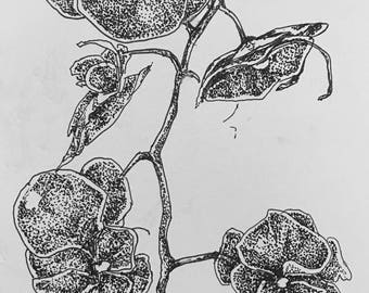 Orchid Pen Drawing