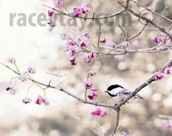 Nature Photography, Chickadee Print, Pink, Gray, Bird Photography, Pastel Decor, Bedroom Wall Art, Girl Nursery Decor