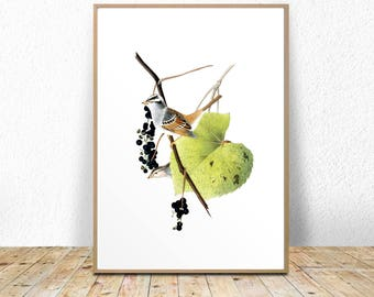 Art Prints Download, Bird Art Printable, Printable Vintage, Botanical bird print, vintage art instant download, vintage illustration,  wall