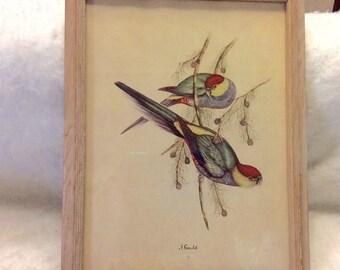 J Gould Sydney Z Lucas framed print 1930s original free ship to US