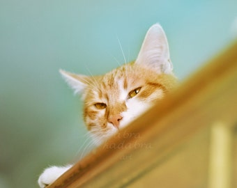 Ginger cat on cupboard Instant Digital Download Art Photography Printable, mint and yellow, for cat lovers, animal photography vintage style