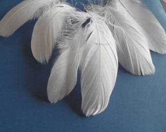 good quality, soft les6 goose feathers.