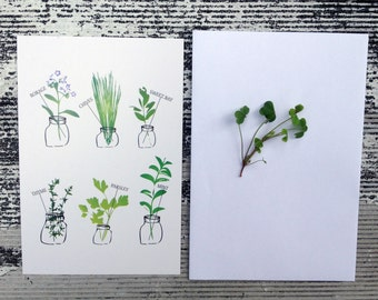 Herbs Greeting Cards