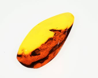 Polished Baltic Amber  15.3g