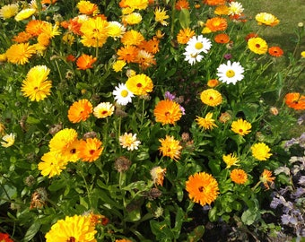 Mixed colours of approx 350 Calendular Seeds in a handmade envelope. Gardening/wedding favours