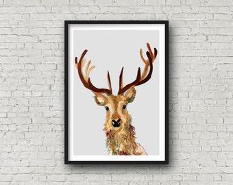 Deer - Deer with Antlers - Stag - Stags head  -  Print