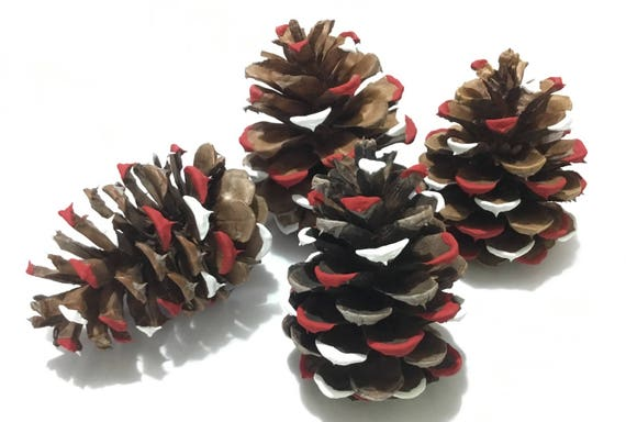 Pine Cone Tree Decoration Charity Fundraiser Holiday Christmas Hand Painted Aged Ponderosa Ornament Natural ECO Friendly Home Decor Gift Set